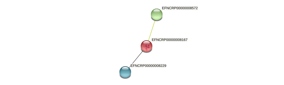 EFNCRP00000008167 protein (Neurospora crassa) - STRING interaction network