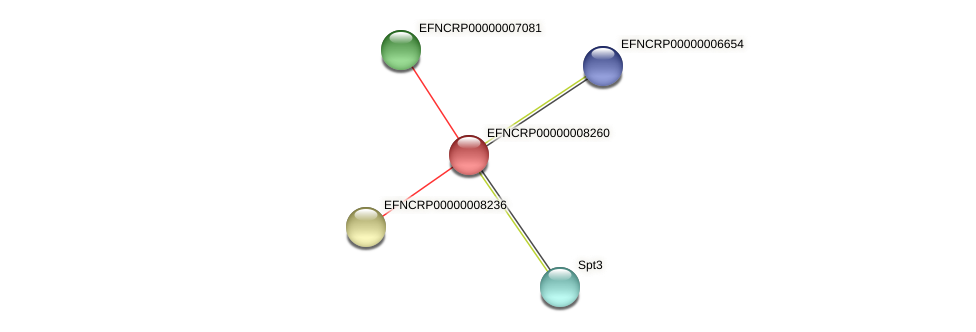 EFNCRP00000008260 protein (Neurospora crassa) - STRING interaction network