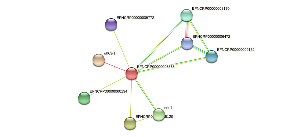 EFNCRP00000008338 protein (Neurospora crassa) - STRING interaction network