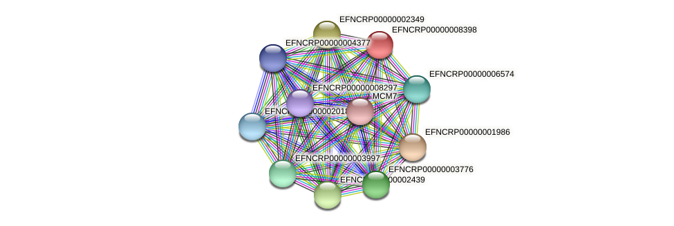 EFNCRP00000008398 protein (Neurospora crassa) - STRING interaction network