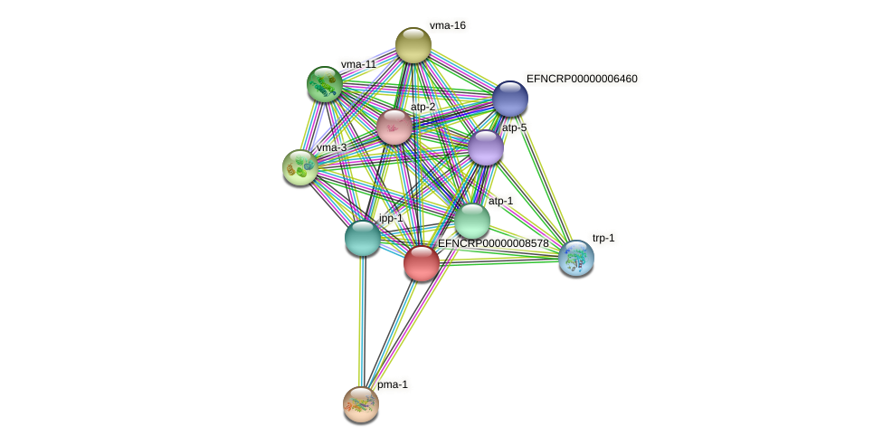 B24M22.210 protein (Neurospora crassa) - STRING interaction network