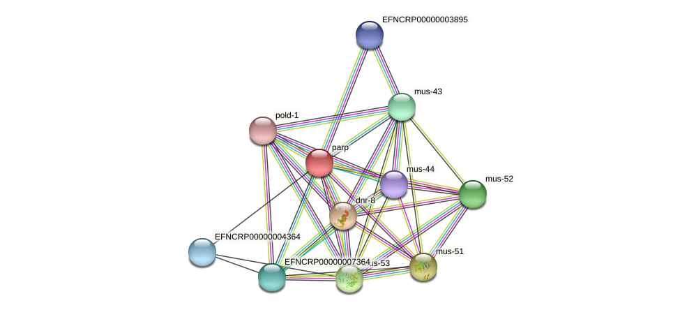 parp protein (Neurospora crassa) - STRING interaction network