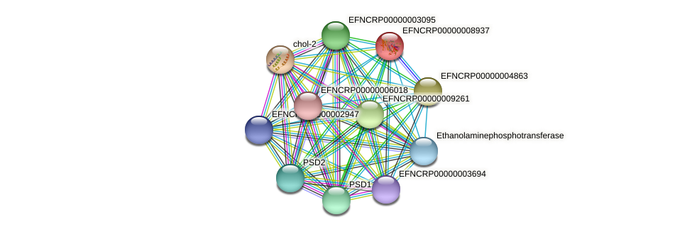 EFNCRP00000008937 protein (Neurospora crassa) - STRING interaction network