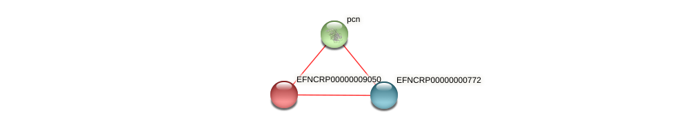 EFNCRP00000009050 protein (Neurospora crassa) - STRING interaction network
