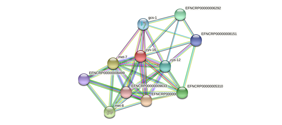 cys-16 protein (Neurospora crassa) - STRING interaction network