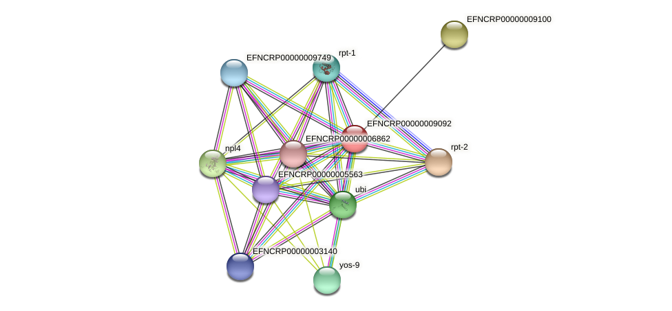EFNCRP00000009092 protein (Neurospora crassa) - STRING interaction network