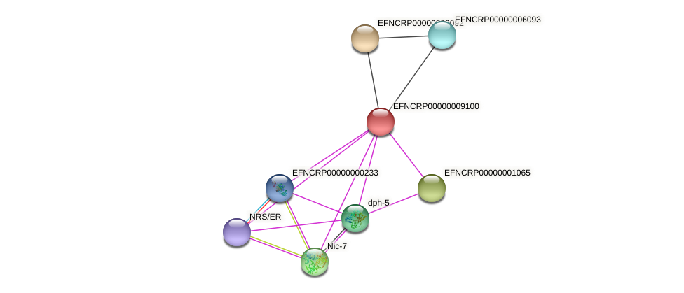 EFNCRP00000009100 protein (Neurospora crassa) - STRING interaction network