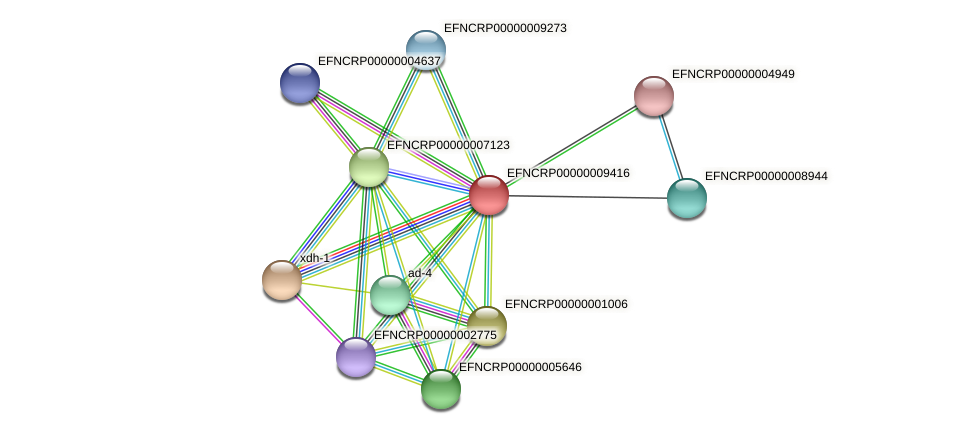 EFNCRP00000009416 protein (Neurospora crassa) - STRING interaction network