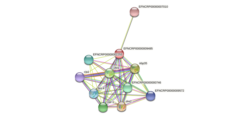EFNCRP00000009485 protein (Neurospora crassa) - STRING interaction network