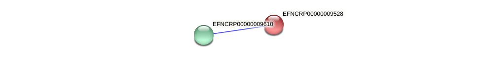 EFNCRP00000009528 protein (Neurospora crassa) - STRING interaction network