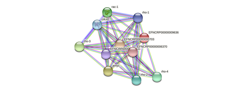 EFNCRP00000009636 protein (Neurospora crassa) - STRING interaction network
