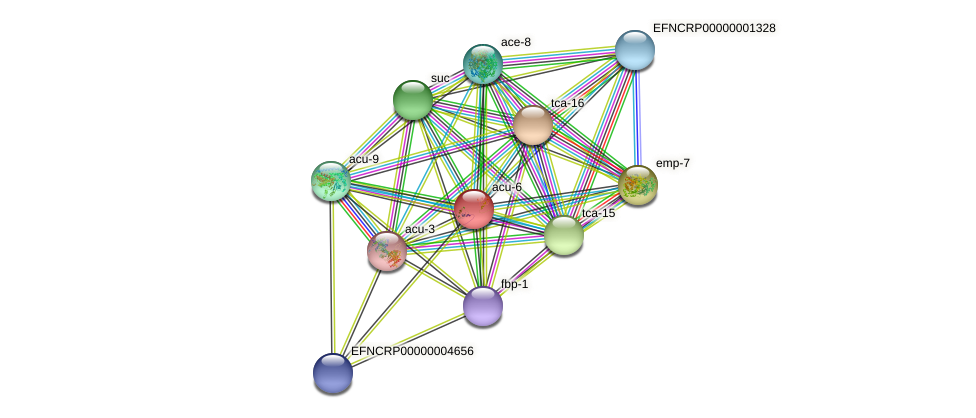acu-6 protein (Neurospora crassa) - STRING interaction network