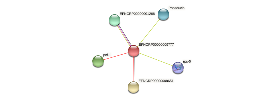 EFNCRP00000009777 protein (Neurospora crassa) - STRING interaction network
