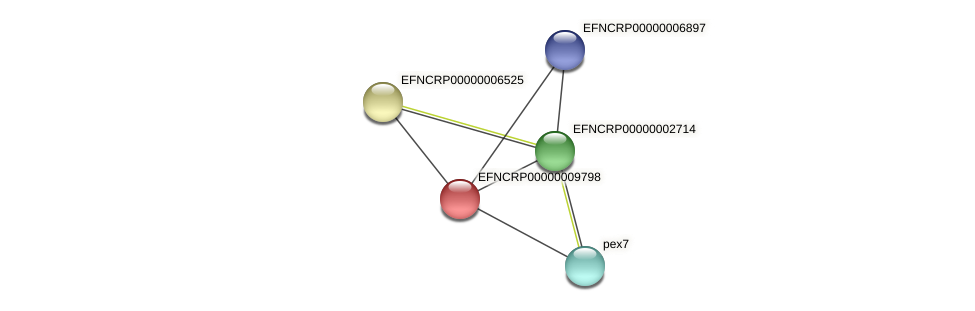 EFNCRP00000009798 protein (Neurospora crassa) - STRING interaction network