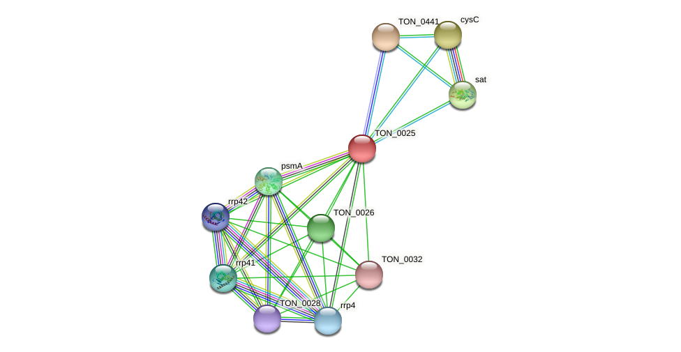 TON_0025 protein (Thermococcus onnurineus) - STRING interaction network
