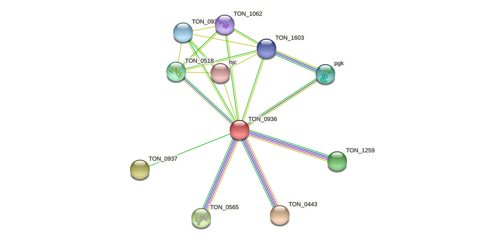 TON_0936 protein (Thermococcus onnurineus) - STRING interaction network