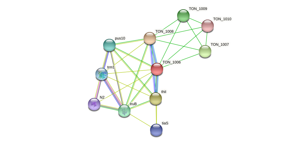 TON_1006 protein (Thermococcus onnurineus) - STRING interaction network