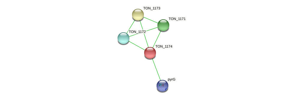 TON_1174 protein (Thermococcus onnurineus) - STRING interaction network