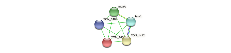 TON_1411 protein (Thermococcus onnurineus) - STRING interaction network