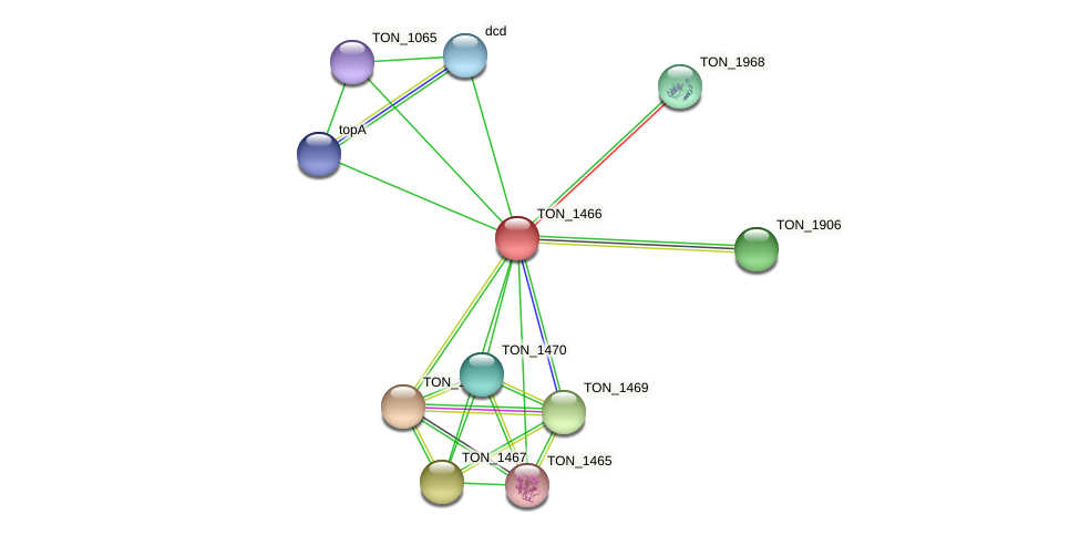 TON_1466 protein (Thermococcus onnurineus) - STRING interaction network