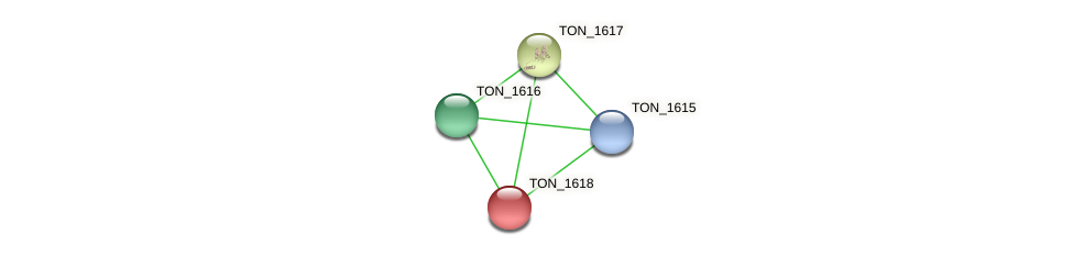 TON_1618 protein (Thermococcus onnurineus) - STRING interaction network