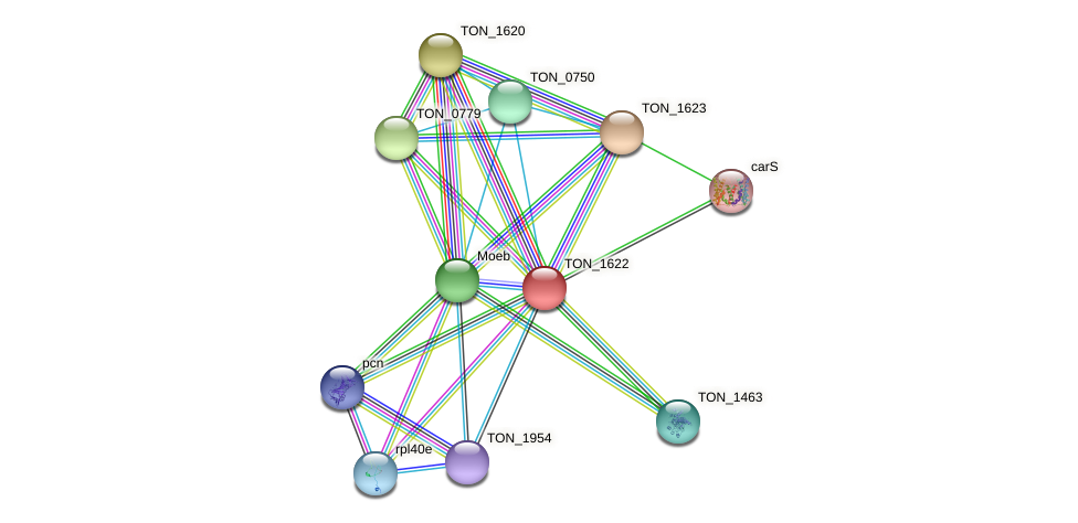 TON_1622 protein (Thermococcus onnurineus) - STRING interaction network