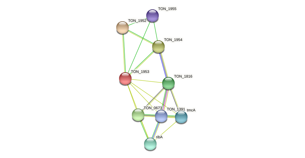 TON_1953 protein (Thermococcus onnurineus) - STRING interaction network