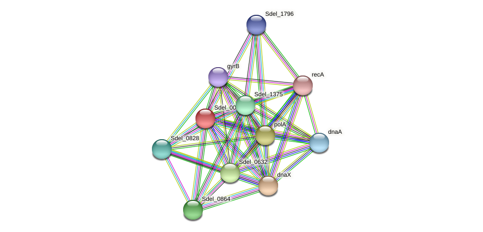Sdel_0004 protein (Sulfurospirillum deleyianum) - STRING interaction network