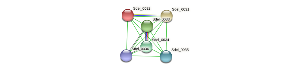 Sdel_0032 protein (Sulfurospirillum deleyianum) - STRING interaction network