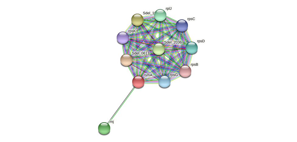 ksgA protein (Sulfurospirillum deleyianum) - STRING interaction network