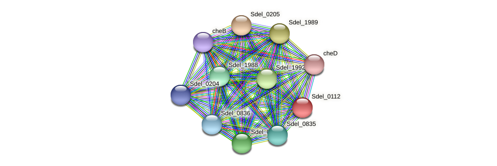 Sdel_0112 protein (Sulfurospirillum deleyianum) - STRING interaction network