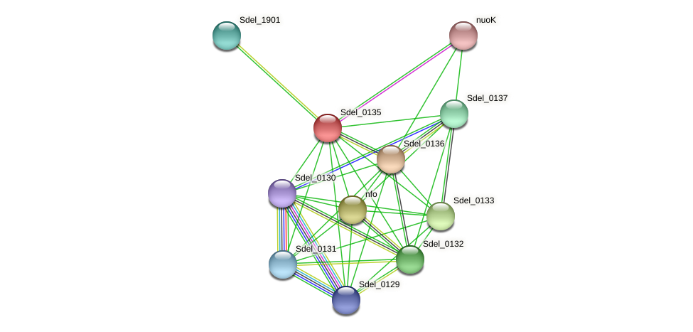 Sdel_0135 protein (Sulfurospirillum deleyianum) - STRING interaction network