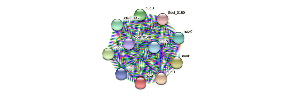 Sdel_0144 protein (Sulfurospirillum deleyianum) - STRING interaction network