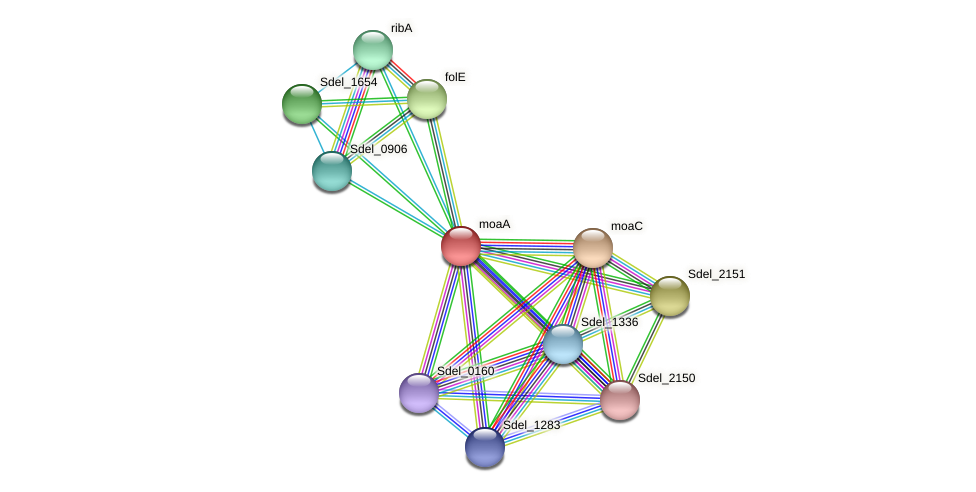 moaA protein (Sulfurospirillum deleyianum) - STRING interaction network