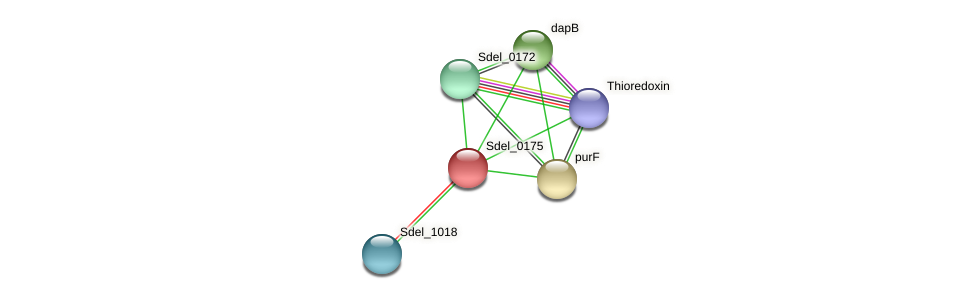 Sdel_0175 protein (Sulfurospirillum deleyianum) - STRING interaction network