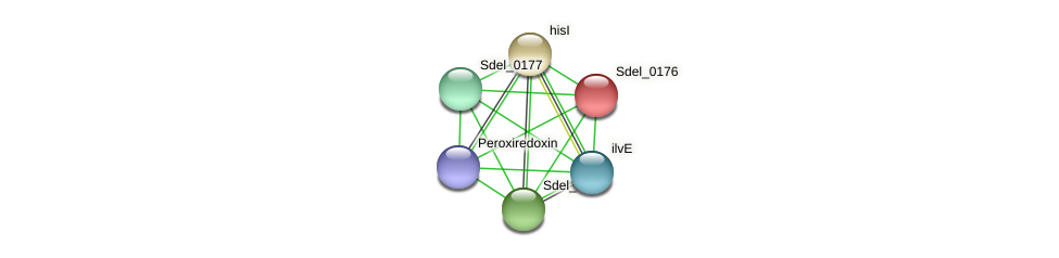 Sdel_0176 protein (Sulfurospirillum deleyianum) - STRING interaction network
