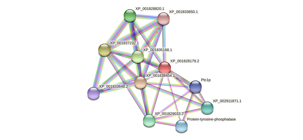 CC1G_02760 protein (Coprinopsis cinerea) - STRING interaction network