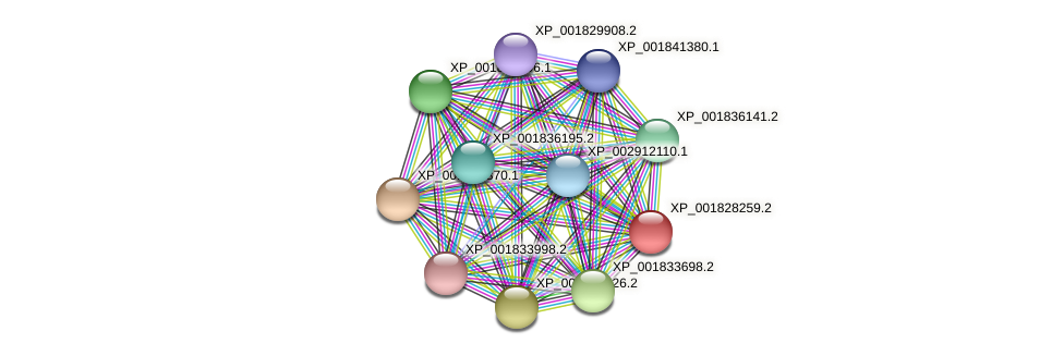 CC1G_02840 protein (Coprinopsis cinerea) - STRING interaction network