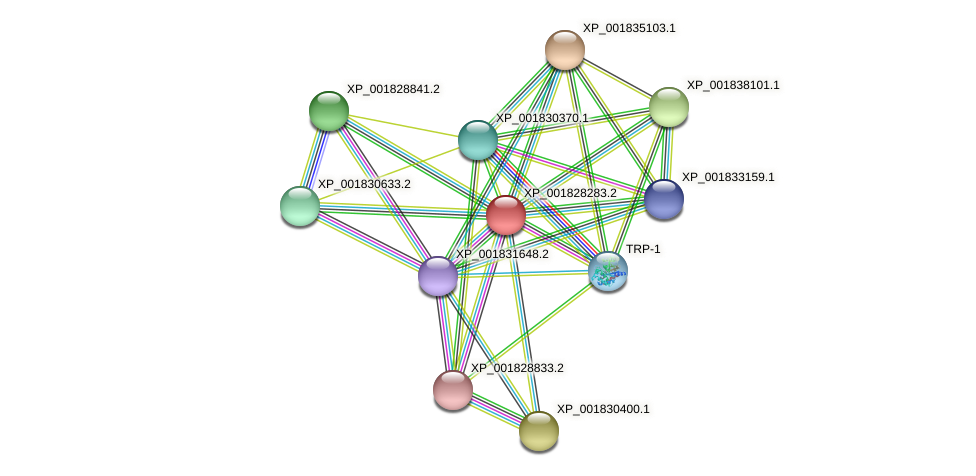 CC1G_02864 protein (Coprinopsis cinerea) - STRING interaction network