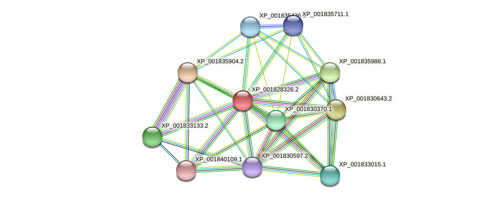 CC1G_12167 protein (Coprinopsis cinerea) - STRING interaction network