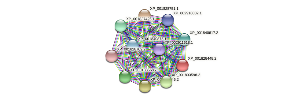 CC1G_04419 protein (Coprinopsis cinerea) - STRING interaction network