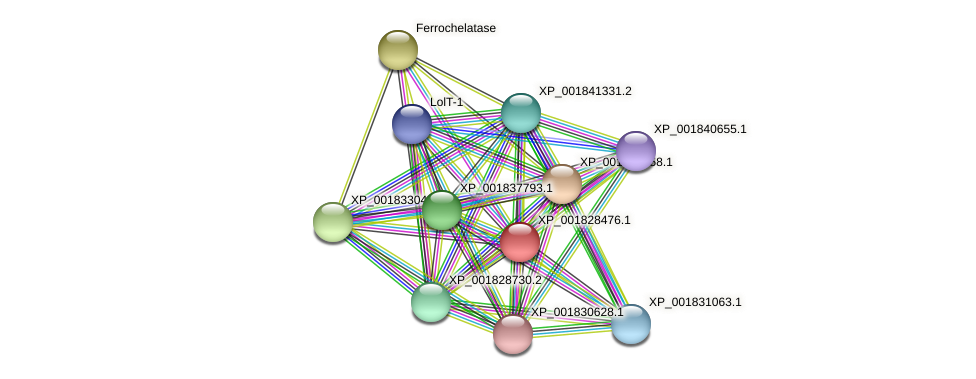 CC1G_08622 protein (Coprinopsis cinerea) - STRING interaction network