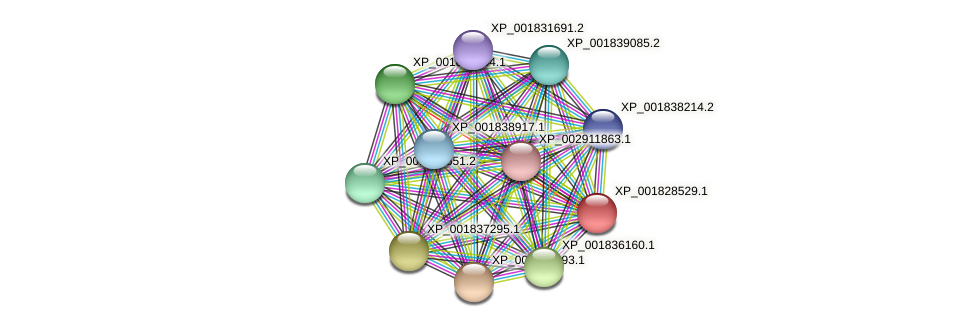 CC1G_12190 protein (Coprinopsis cinerea) - STRING interaction network