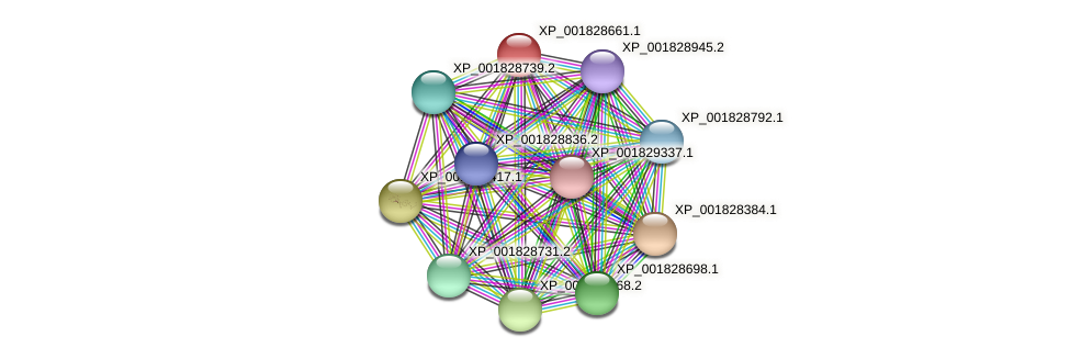 CC1G_10533 protein (Coprinopsis cinerea) - STRING interaction network