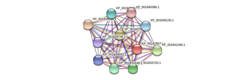 CC1G_10546 protein (Coprinopsis cinerea) - STRING interaction network