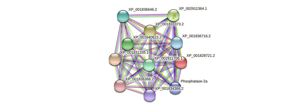 CC1G_11311 protein (Coprinopsis cinerea) - STRING interaction network