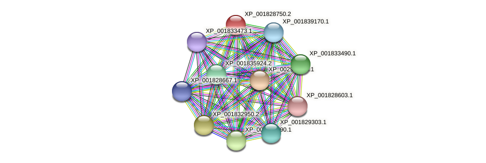 CC1G_06736 protein (Coprinopsis cinerea) - STRING interaction network