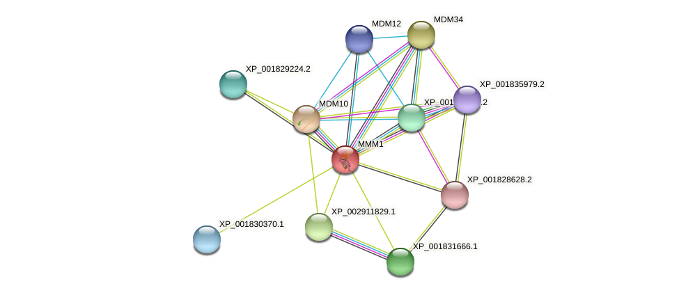 MMM1 protein (Coprinopsis cinerea) - STRING interaction network