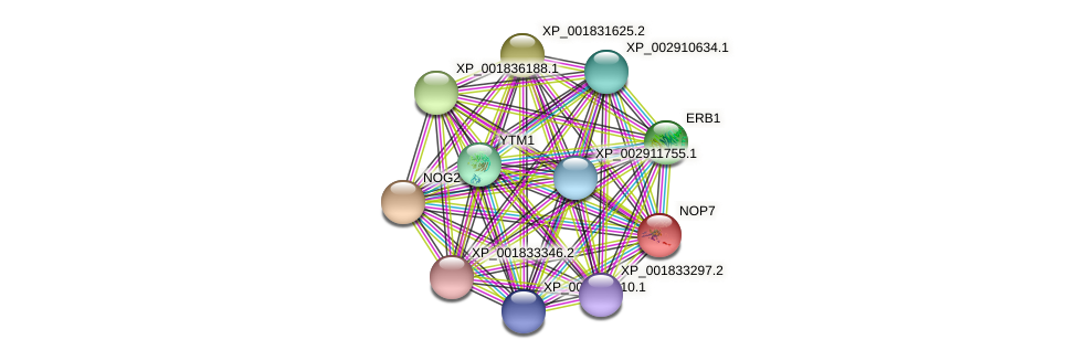 NOP7 protein (Coprinopsis cinerea) - STRING interaction network