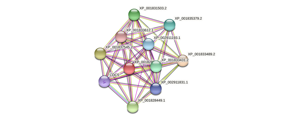 CC1G_03736 protein (Coprinopsis cinerea) - STRING interaction network